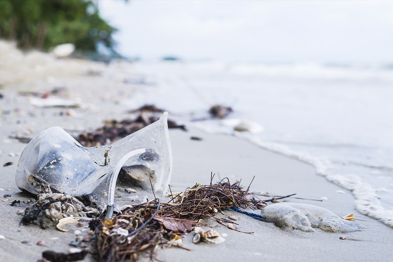 WWF and Mr. Green Africa join hands to recycle plastic on the coasts