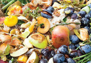 Report: The Avoidable Crisis of Food Waste